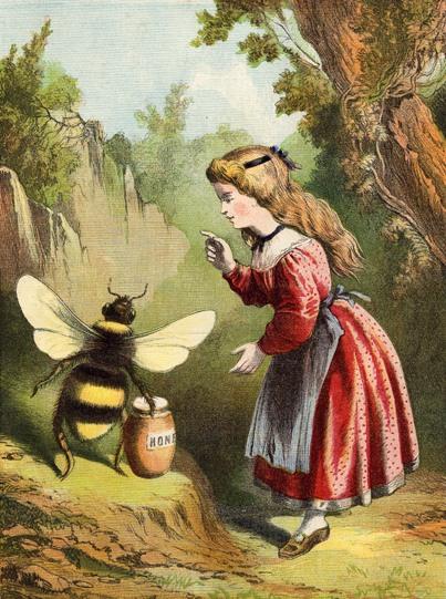 abelha empatia