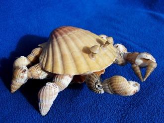 taquid férias de verão apanhar conchas e fazer um caranguejo